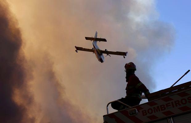 z22241071Q,Portugal-Wildfires.jpg