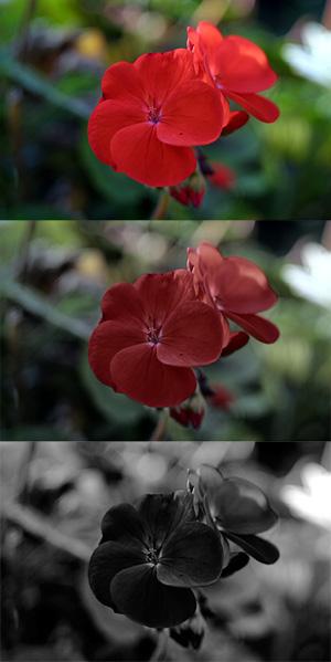 Red_geranium_photoic_mesopic_scotopic.jp