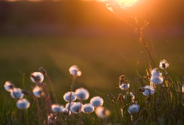 Soft_sunset_by_Krawat93.jpg