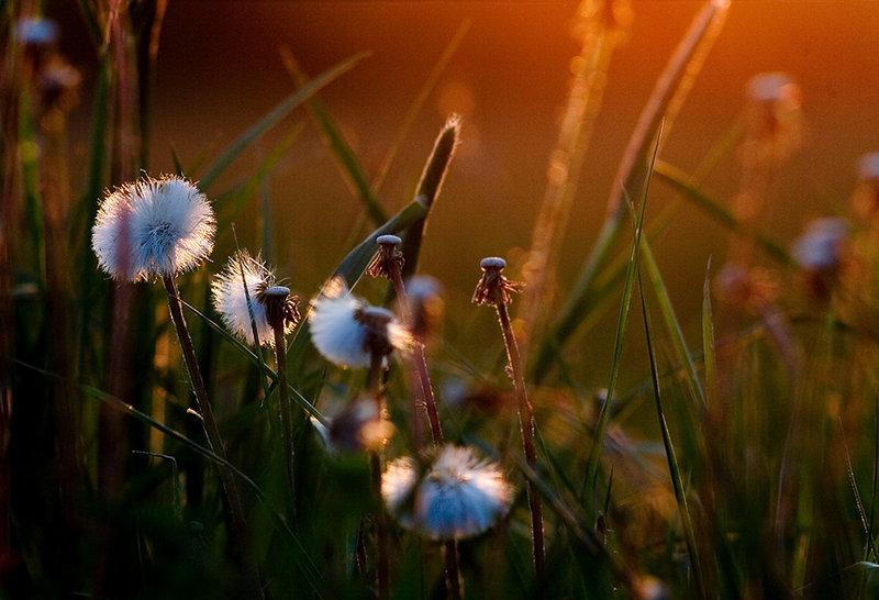 Spring_time_by_Krawat93.jpg