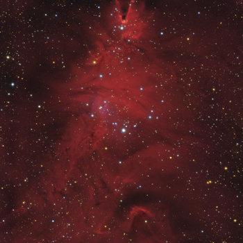 NGC 2264.jpg