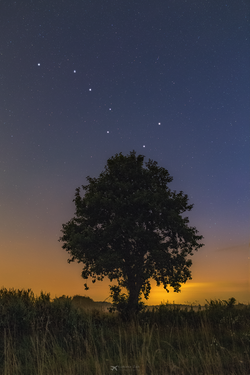 Drzewo+Bigdipper_27_07_2018_logo.png
