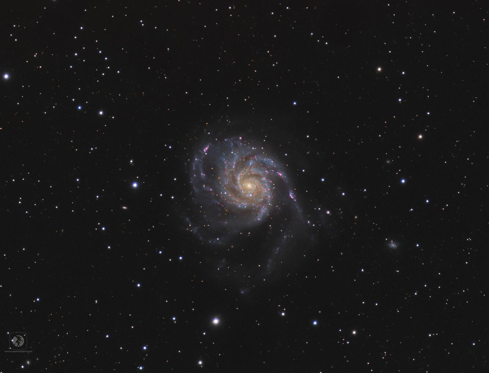 M101-gotowe2.thumb.jpg.68e6a0d77c260737cb3e7a93f7517b91.jpg