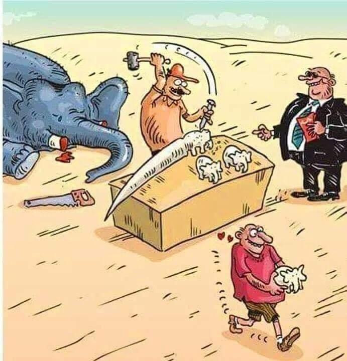 sloniki.jpg