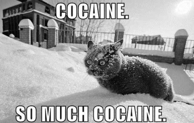 coke_cat_freak.jpg