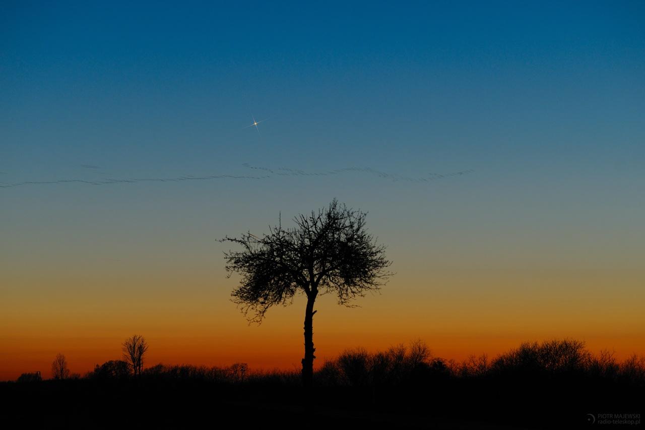 2020-02-07_Mercury_tree_web.jpg