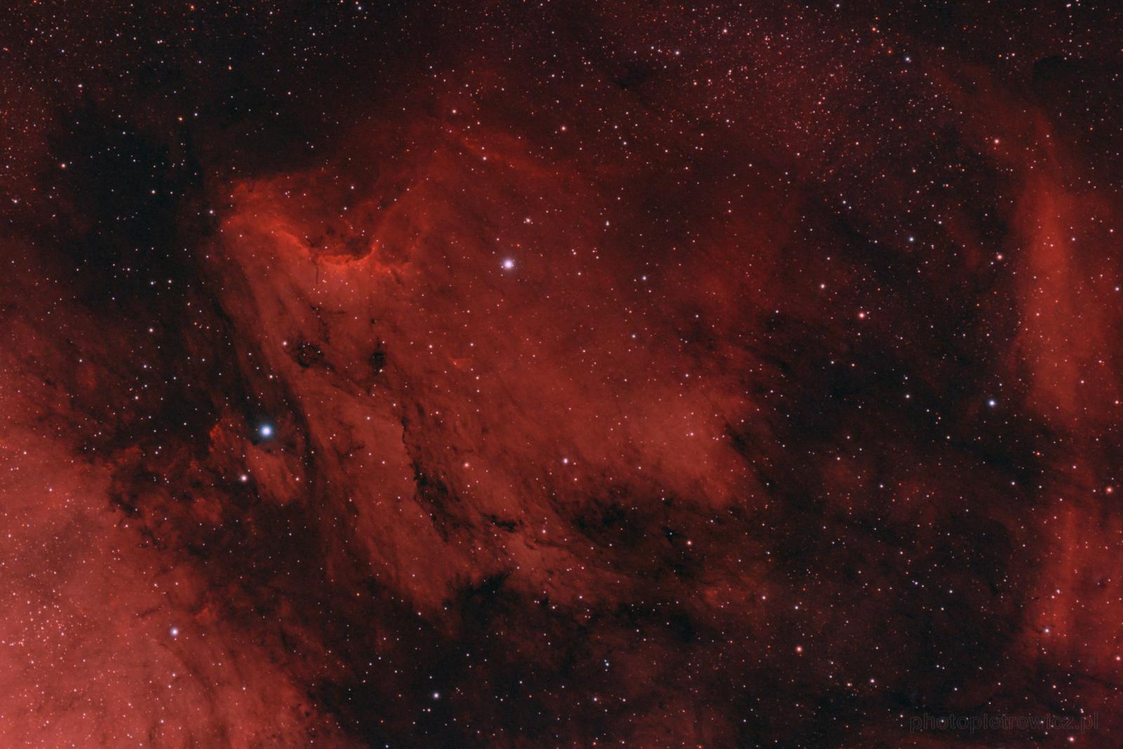 pelican3b.thumb.jpg.84ba25e9406e018d11fb42ed0e62f8c6.jpg