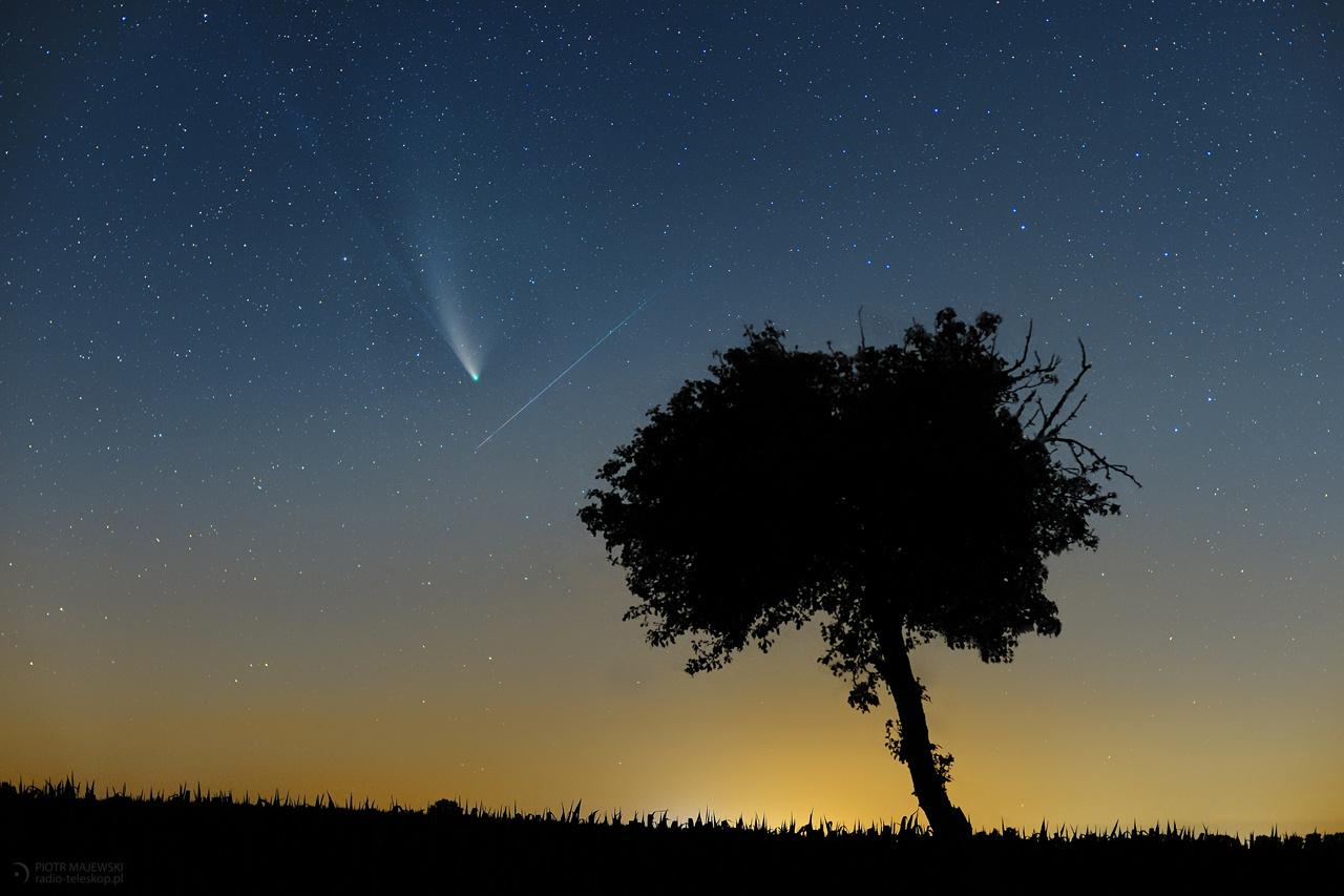 2020-07-23_Comet-2020-F3-NEOWISE_tree_Perseid_web.jpg