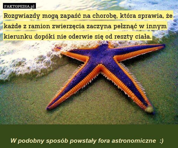 rozgwiazda__.jpg
