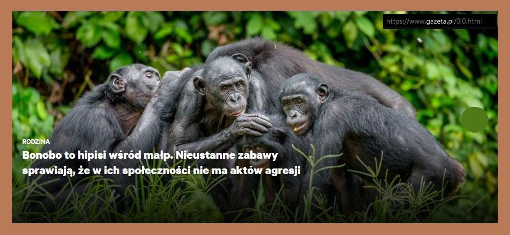 __bonobo.jpg