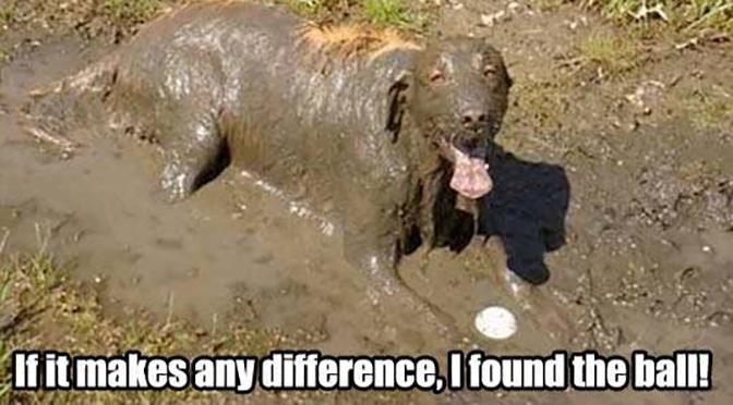 muddy-dogs-mud-puppy.jpg.8038fd8cace14fa48ff2058f157f5aad.jpg