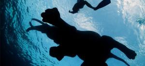 swimm.jpg