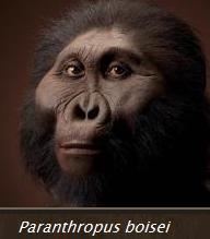 Paranthropus__bosei.jpg